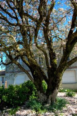 Magnolia - La Chapelle Thireul 04 © Yanick