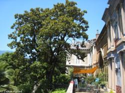 Magnolia-grandiflora-casamaures2