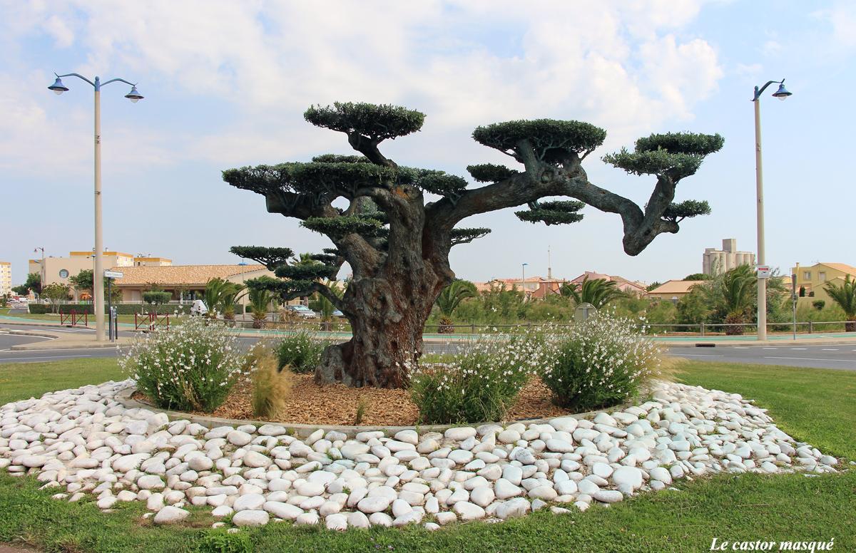 Les oliviers bonsaïs de Port-la-Nouvelle, Aude   Les têtards arboricoles