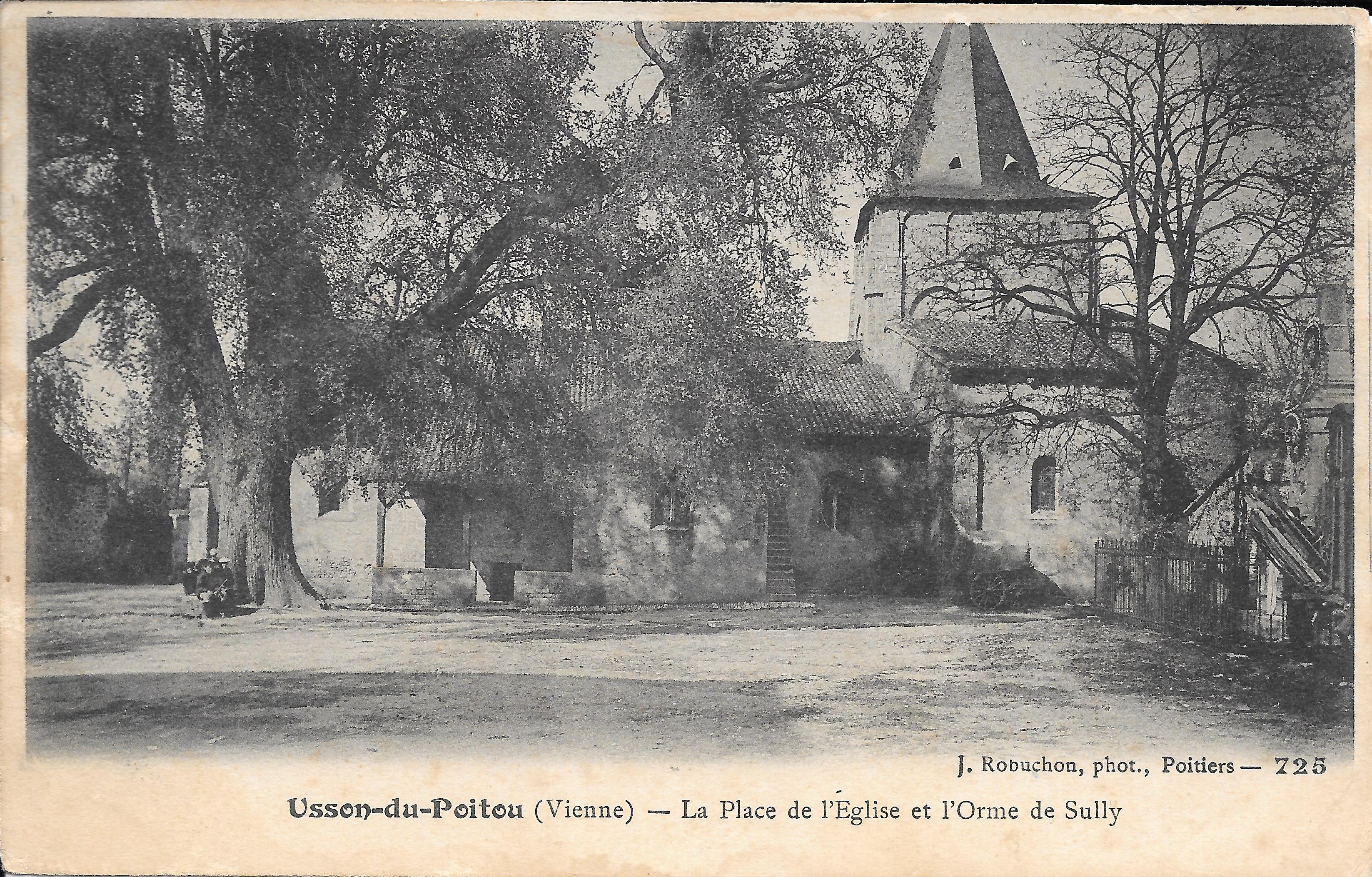 Orme Usson du Poitou, Vienne (1)
