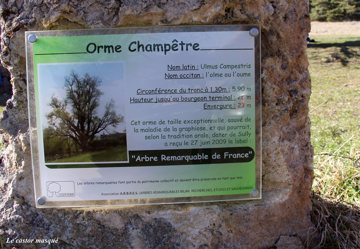 Orme-champetre-st-pierre-des-tripiers00