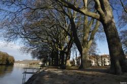 Platane parc Japiot Verdun Meuse