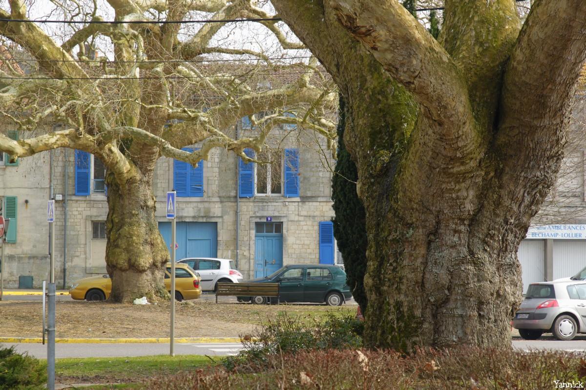 Platanes Place St Nicolas Verdun, Meuse Yannick Morhan (12)