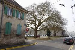 Platanes Place St Nicolas Verdun, Meuse Yannick Morhan (6)