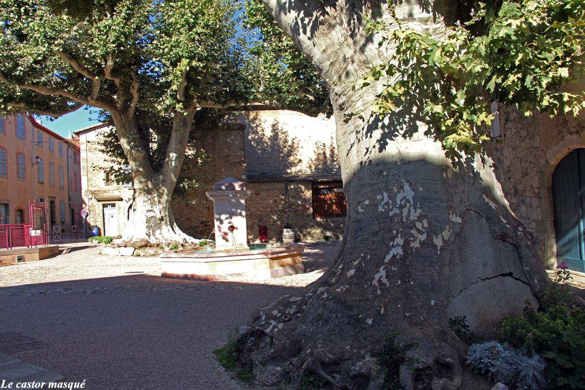 Platanes-caunes-minervois1
