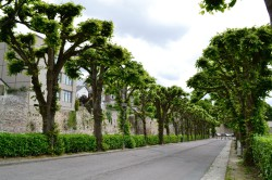Promenade Petits fossés (7) redim
