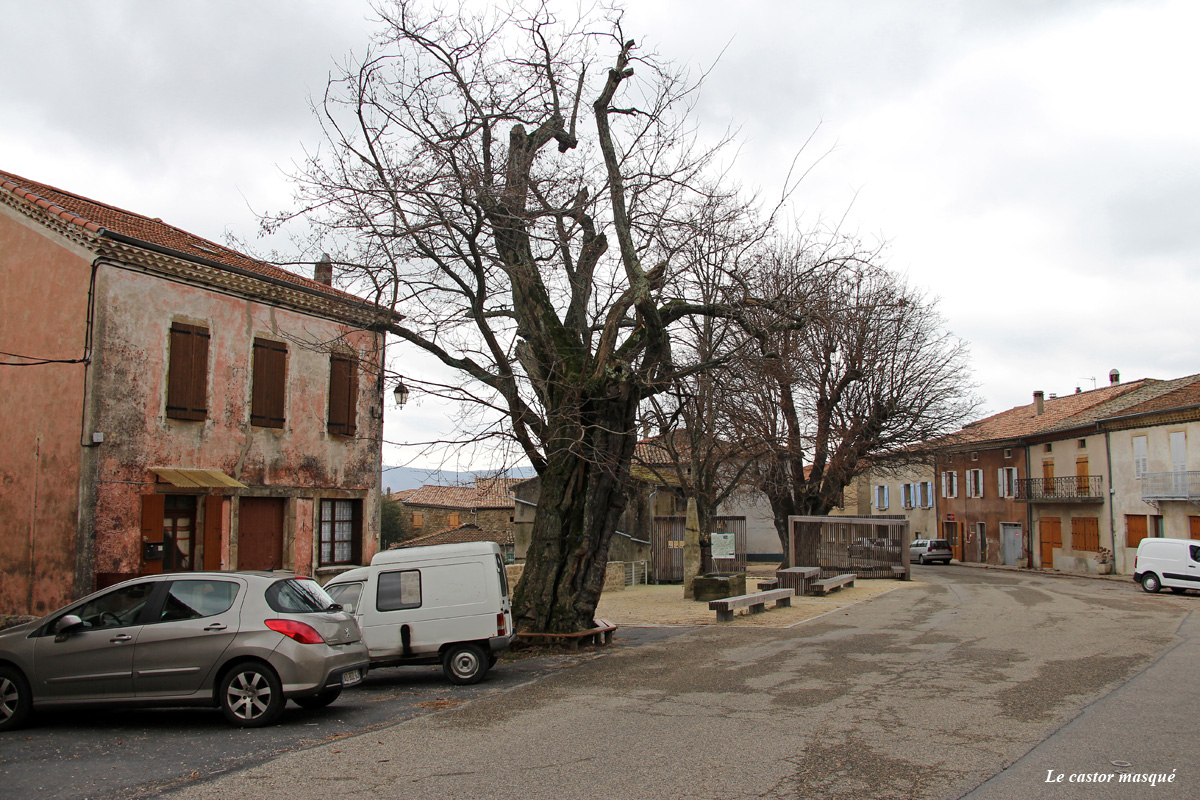 Robinier-st-michel-de-chabrillanoux9