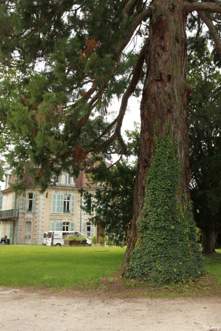 Séquoia d'Arbois, Franche Comté, Yannick Morhan (26)