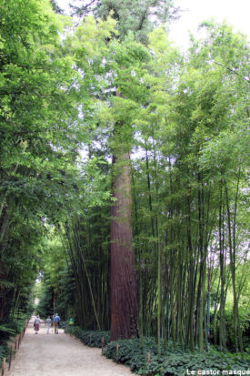 Sequoia-sempervirens-bambouserai-anduze2