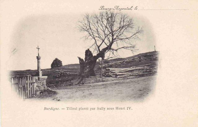 Tilleul de Sully Burdignes, Loire Arbres42 (1)