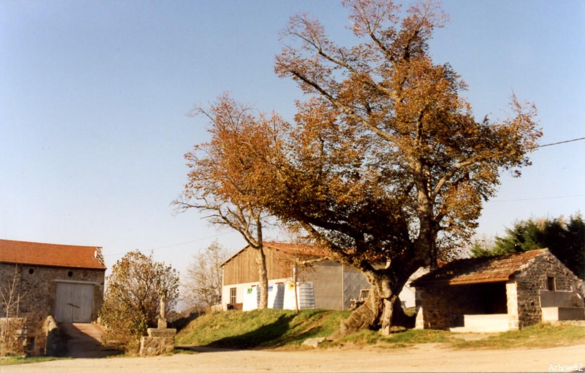 Tilleul de Sully Burdignes, Loire Arbres42 (5)
