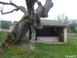 Tilleul de Sully Burdignes, Loire Arbres42 (6)