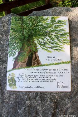 Tilleul-grandes-feuilles-st-colomban-les-villards2