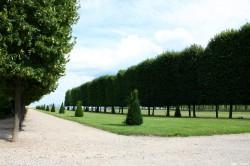 Tilleuls du domaine royal de Saint-Germain en Laye, Yvelines Jean Luard (5)
