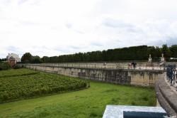 Tilleuls du domaine royal de Saint-Germain en Laye, Yvelines Jean Luard (6)