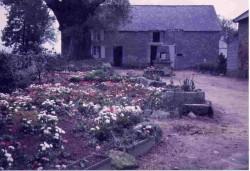 Vers 1975 fleurs dans la cour