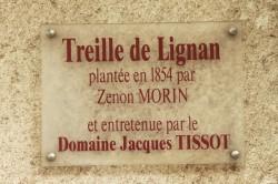 Vigne d'Arbois, Franche Comté, Yannick Morhan (29)