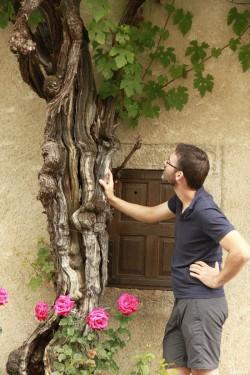Vigne d'Arbois, Franche Comté, Yannick Morhan (42)