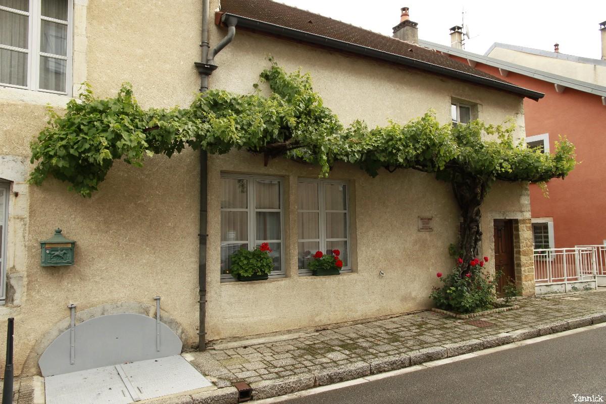 Vigne d'Arbois, Franche Comté, Yannick Morhan (43)