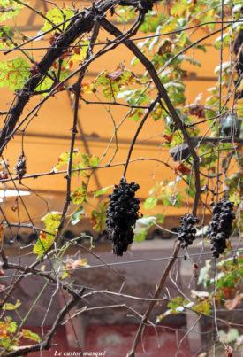 Vigne-meknes7-castor