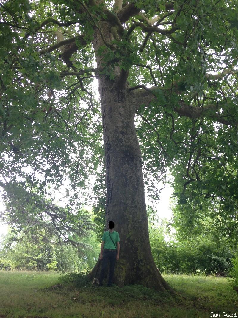 arbres château du Plessis-Bourré, Maine et Loire, Jean Luard (3)