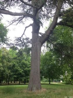 arbres château du Plessis-Bourré, Maine et Loire, Jean Luard (5)