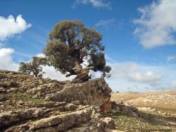 avaleurs-pierres-ain-leuh-maroc1-castor