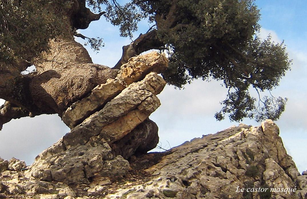 avaleurs-pierres-ain-leuh-maroc2-castor