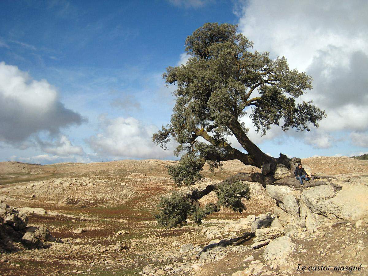 avaleurs-pierres-ain-leuh-maroc3-castor