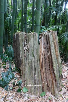 bambouseraie-anduze01