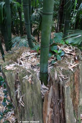 bambouseraie-anduze02