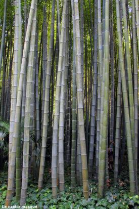 bambouseraie-anduze10