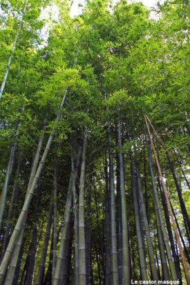 bambouseraie-anduze11