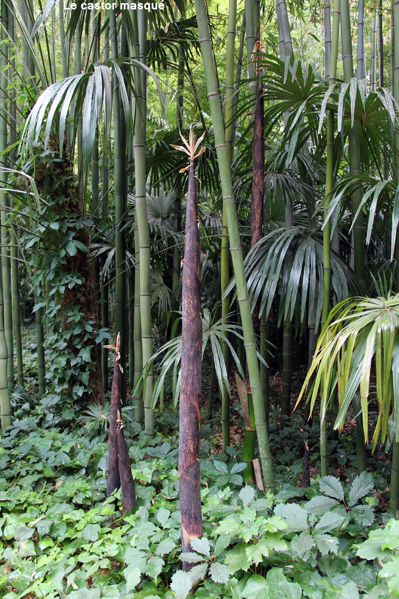bambouseraie-anduze13