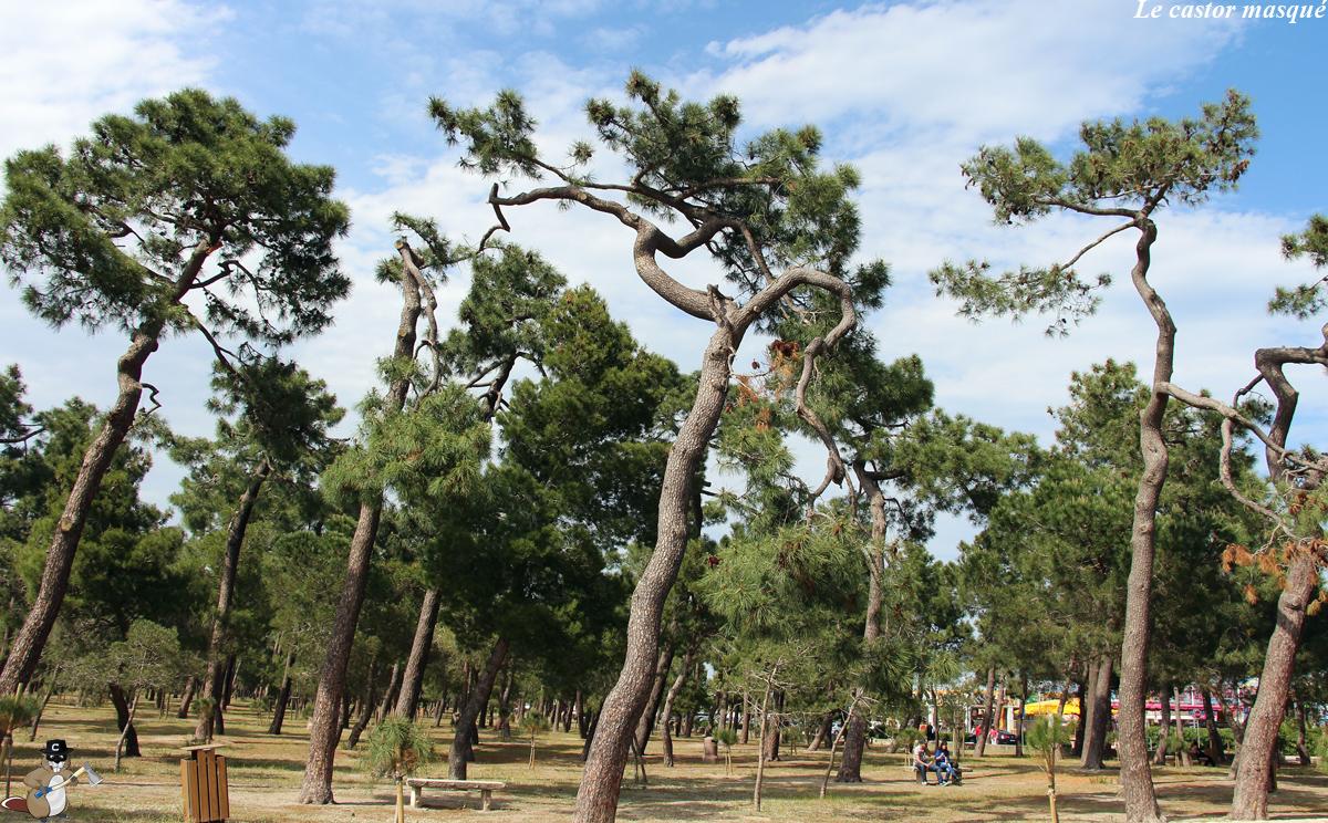 bois-des-pins-argelès1