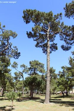 bois-des-pins-argelès7