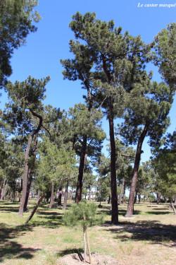 bois-des-pins-argelès8