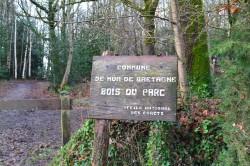 bois-du-parc-séquoia sempervirens_ Mur-de-Bretagne