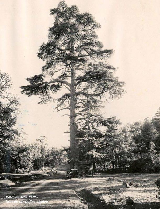 cèdre-gouraud-1930