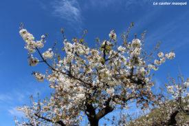cerisier-crozes-hermitage06