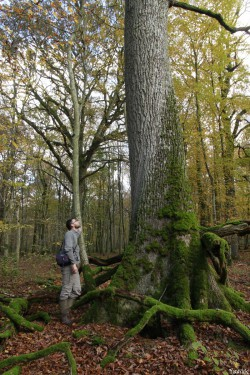 chêne 2 Herméville-en-Woëvre, Meuse Yannick Morhan (12)