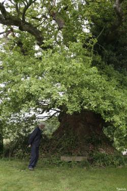 chêne du Margaro à Rouillac, Côtes d'Armor Yannick Morhan 2007 (4)