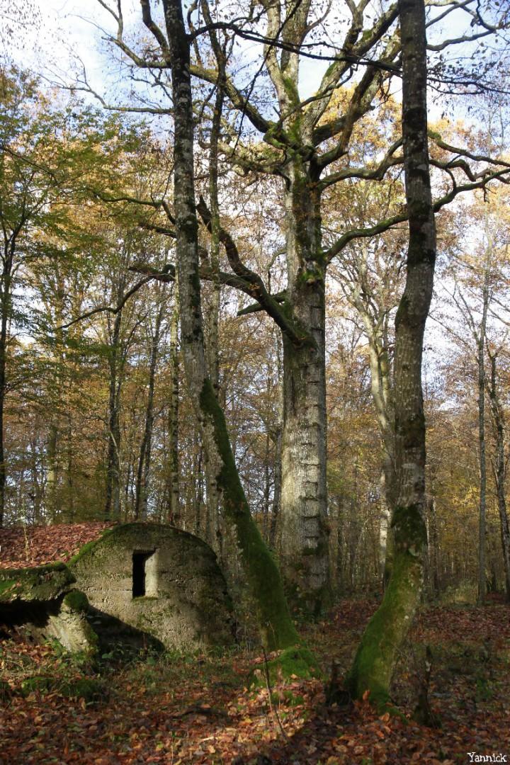 chêne observatoire de Herméville-en-Woëvre, Meuse Yannick Morhan (3)