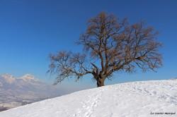 chene-venon-hiver1
