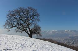 chene-venon-hiver3
