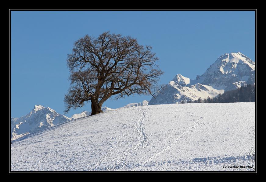 chene-venon-hiver93