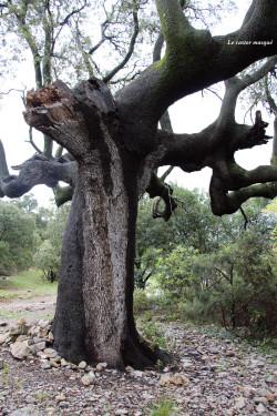 chene-vert-pic-st-loup2014-07-castor