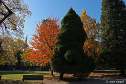 copalme-jardin-plantes1