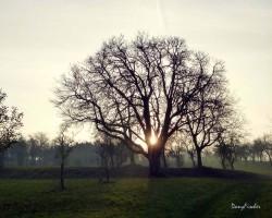 cormier Saverne 10 © Danny Fischer