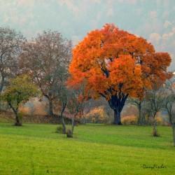 cormier Saverne 3 © Danny Fischer